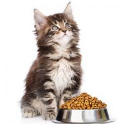 Съвети при хранене на котета под 1 година