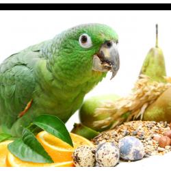 Правилно хранене при птиците